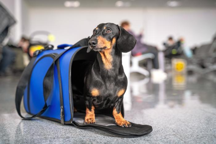 American Airlines Grounds Emotional Support Animals